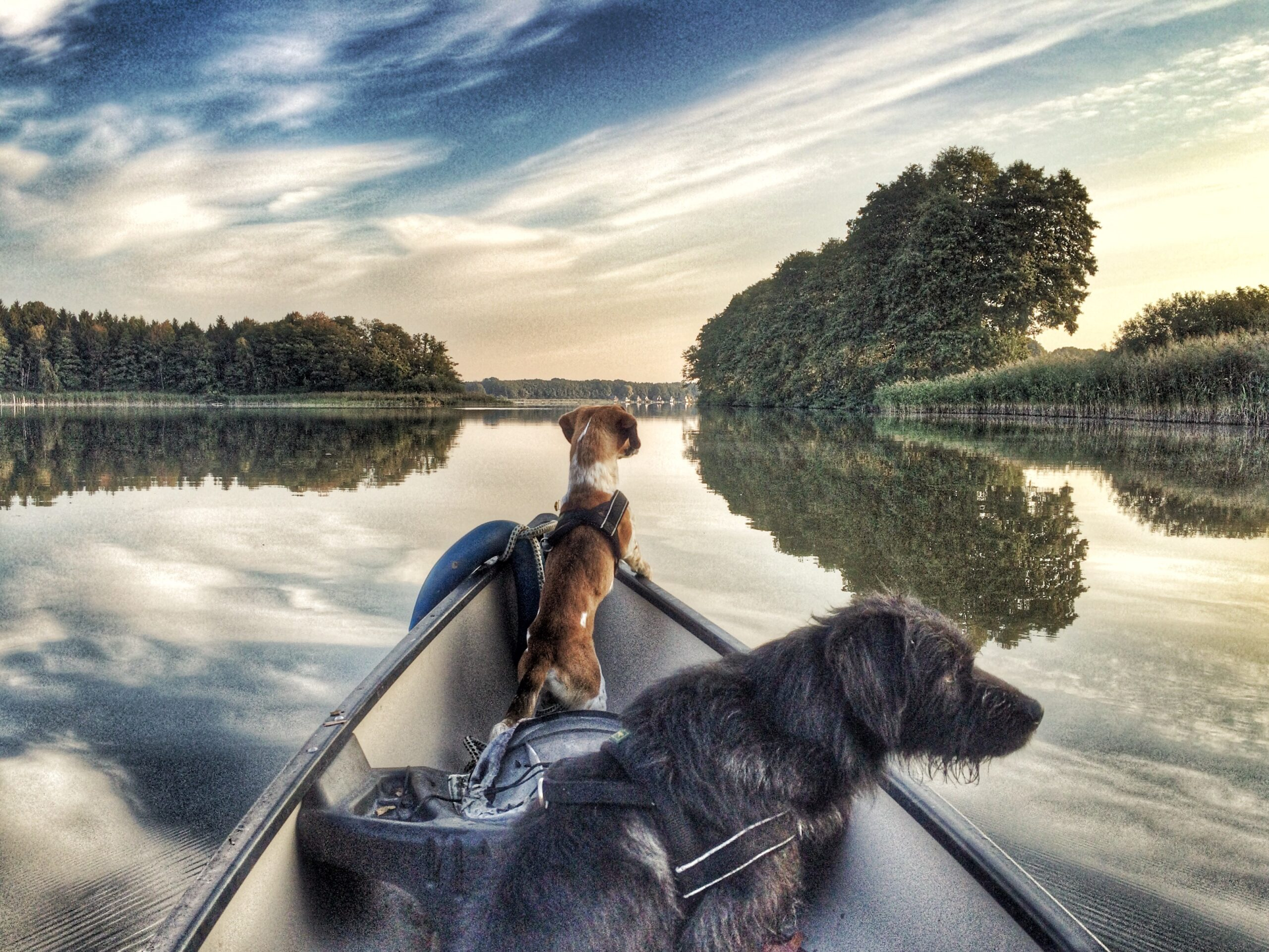 2 Hunde in einem Boot schauen auf einen See